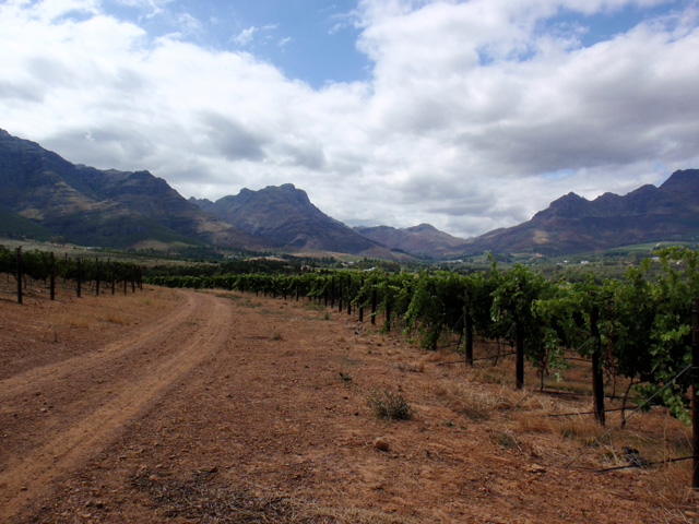 Stellenblog_vineyardmountains